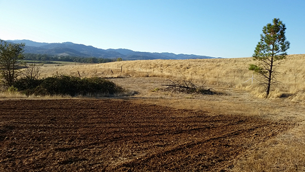 Freshly tilled field surrounded by golden hills, a berry patch, a dead tree and a live tree.
