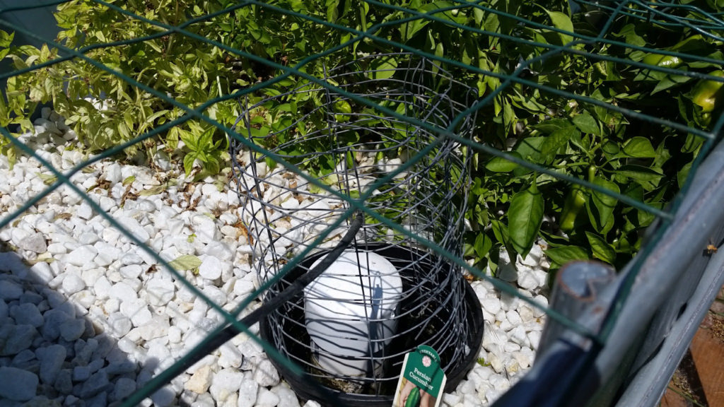 Growbed filled with white gravel and green plants with a black plastic insert in the lower corner, which keeps the gravel contained and away from the bell siphon.