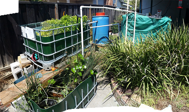 two green half-IBC totes with plants, a blue plastic barrel, and a green shade cloth wrapped around anothe IBC Tote.