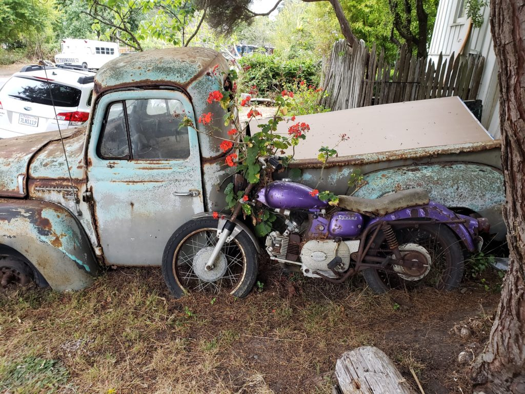 Old truck covered with rust and faded paint with a purple motorcycle leaned against it, in similar state of disrepair. A giant geranium grows up between the two.